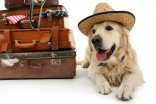 Trasporto di animali in aereo: ecco cosa fare